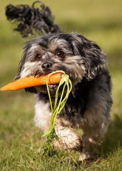 dog-with-carrot